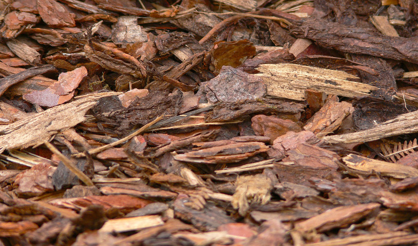 Trying To Save Money On Mulch? Safe Brush Chipping Is For You