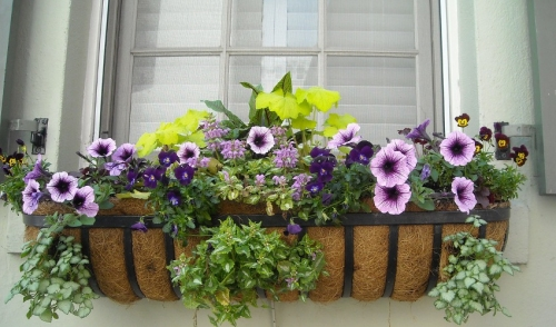 Window Boxes Can Dress up Your House
