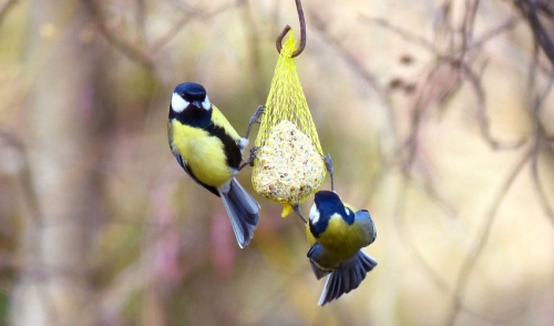 At Home Recipes For Your Bird