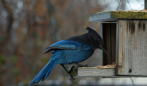 How Different Bird Feeders Attract Different Birds
