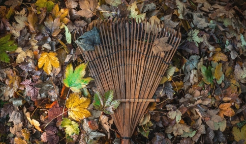Power Raking: Tools & Tips You Need