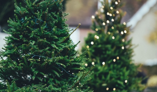 Real vs. Artificial Christmas Trees