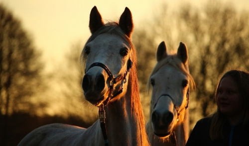 Riding into the Sunset: Ways to Keep Your Senior Horse Active