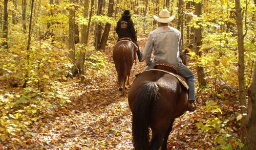 What to Do If Your Horse Is Injured On a Trail Ride