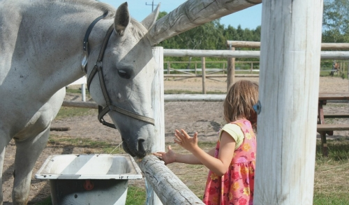 Feeding Your Horse Treats