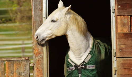 Identifying Horse Colic And What To Do About It