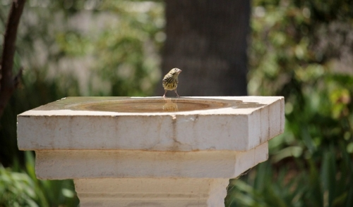 Placing Your Birdbath