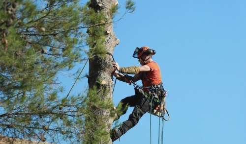 Staying Safe While Using A Pole Chain Saw