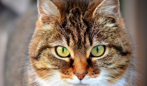 Why To Consider Adopting An Older Cat