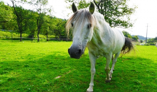 How Do I Help My Older Horse From Losing Weight?