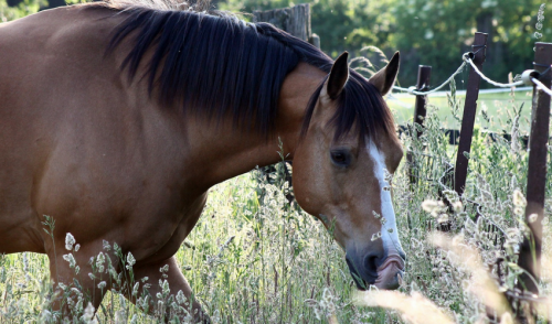 How Often Should I Deworm My Horses?