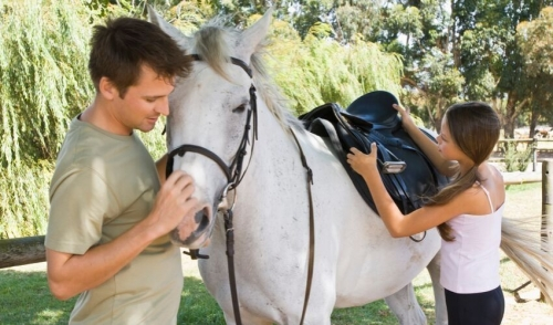 Getting Tack to Fit Your Horse Properly