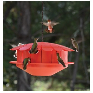 The Humm-Bug Hummingbird Protein Feeder