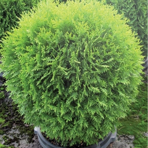 Trees, Shrubs & Perennials - Half Off!