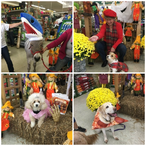 Dress Your Pet For Halloween Costume Contest