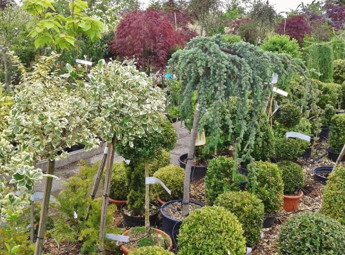 Trees & Shrubs - Up to 50% Off