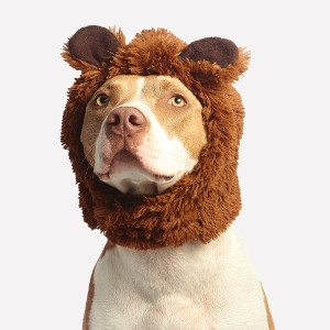 40% Off Pet Halloween Costumes