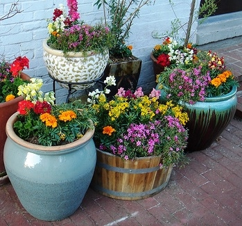 Container Gardening Seminar - Afternoon