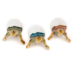 Assorted Baby Sea Turtle Hatchlings