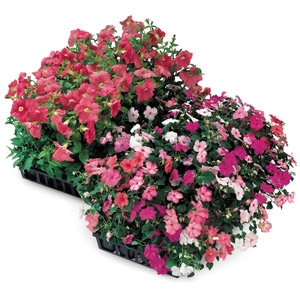 Market Pack Annuals Full Flat $16.99