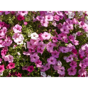 Hanging Baskets $19.99