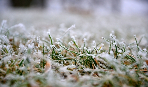 Tips to Help Your Lawn Survive the Winter