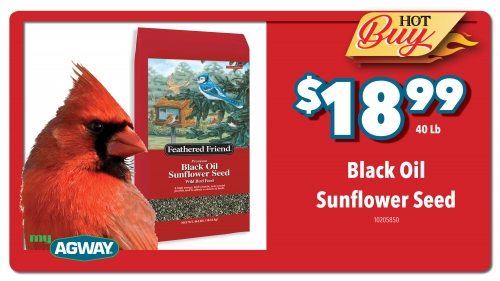 Black Oil Sunflower Seed, 40Lb