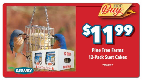 Pine Tree Farms Suet Cake- 12 pack