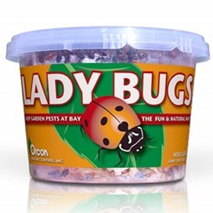 Orcon Lady Bugs 500 Live Adults