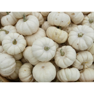 FREE Ghost Pumpkin with $10 or More Purchase