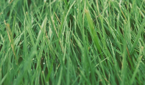 Cornell's Tips for March Lawn Care