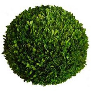 Boxwood Topiary Ball