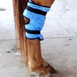 Equi Cool Down Equine Hock Wraps