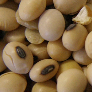 Roasted Soybeans Feed Supplement