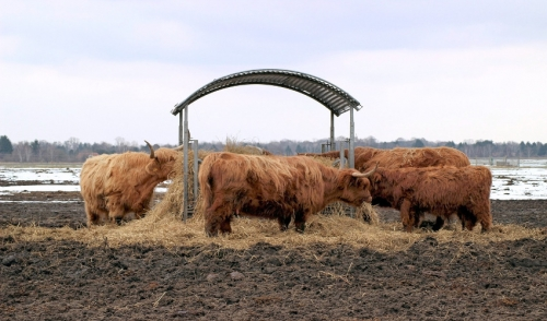 10 Step Winter Cattle Feeding Program