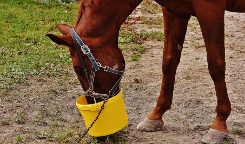 Nutrition Tips to Help Get Your Horse Ready to Ride After Winter