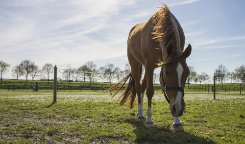 How to Prevent and Minimize Problems When Introducing Horses to Spring Pastures