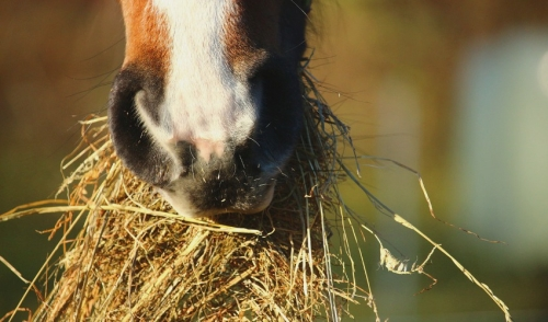 How to Use Complete Feeds to Stretch Your Hay Supply