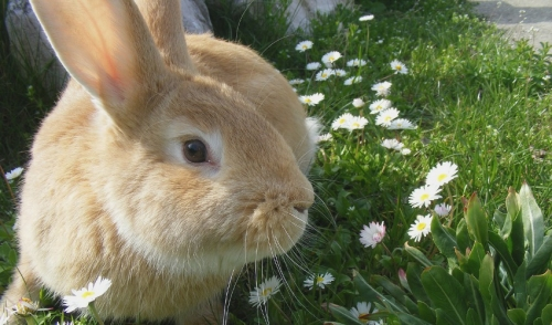 How to Keep your Rabbit Healthy and Happy During the Summer