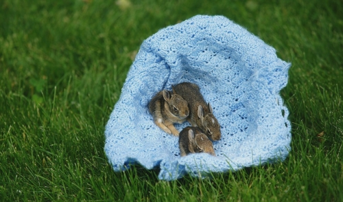 How-to Prepare for the Birth of Baby Rabbits