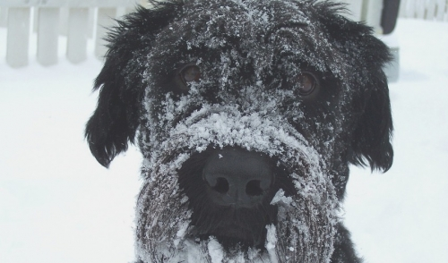 Keeping your Pet Healthy During the Winter
