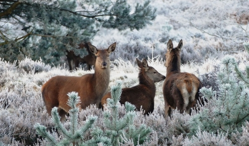 Tips for Making it a Better Winter for Wildlife