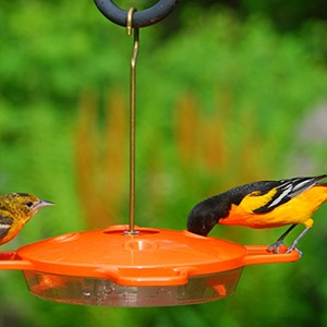 Aspects® Oriole Feeder