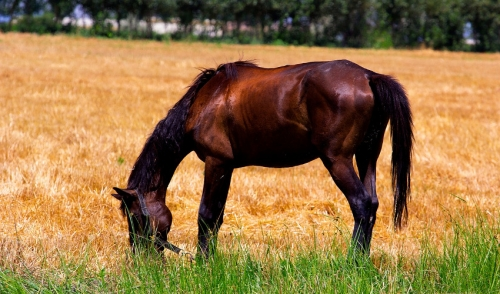 Ideas for Decreasing Heat Stress in Horses
