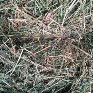 Eastern Washington Alfalfa - Certified Weed Free