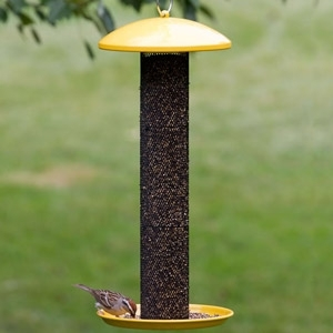10% Off All Bird Feeders
