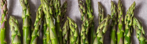Michigan Asparagus Now In Season