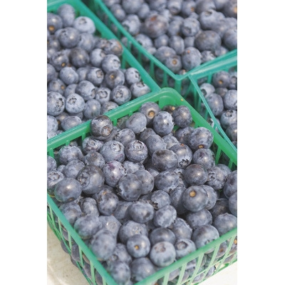 Locally Grown Southwest Michigan Blueberries