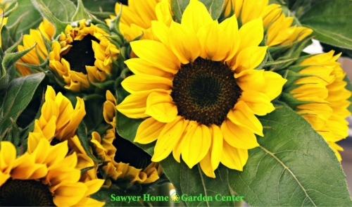 Why Buy From Sawyer Garden Center?