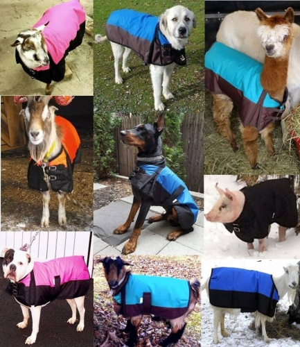 15% Off Dog Coats